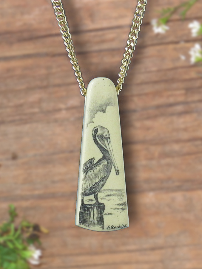 Pelican scrimshaw